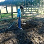regando árbol recién plantado
