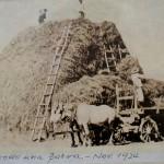 terminado parva 1924
