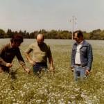 Lino alfonzo INTA 1985 Casatti_Balzi_Ruiz-Lote9