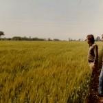 Trigo Buck Pangaré 1985 TRIPLE DOSIS UREA-Casatti_Balzi_Ruiz-Lote9