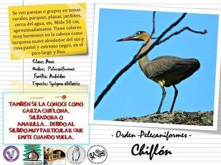 FICHAS TÉCNICAS DE AVES QUE HABITAN EN EL ÁREA NATURAL PROTEGIDA FLORINDO DONATI (ANPFD)